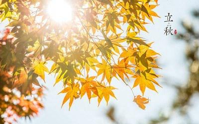 立秋早和晚有什么区别?早立秋是指几点到几点?