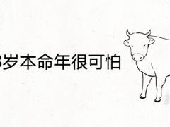 属牛48岁本命年很可怕为什么 2021年会遇到哪些劫难